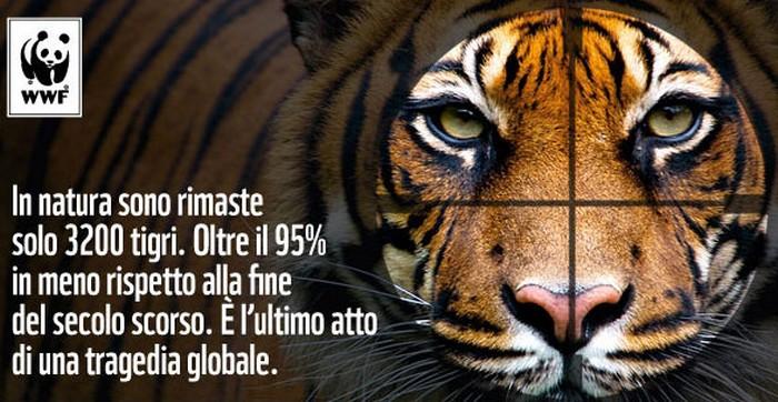 Tigre_wwf_700